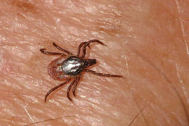 Maladie de Lyme et prévention contre les piqûres de tiques