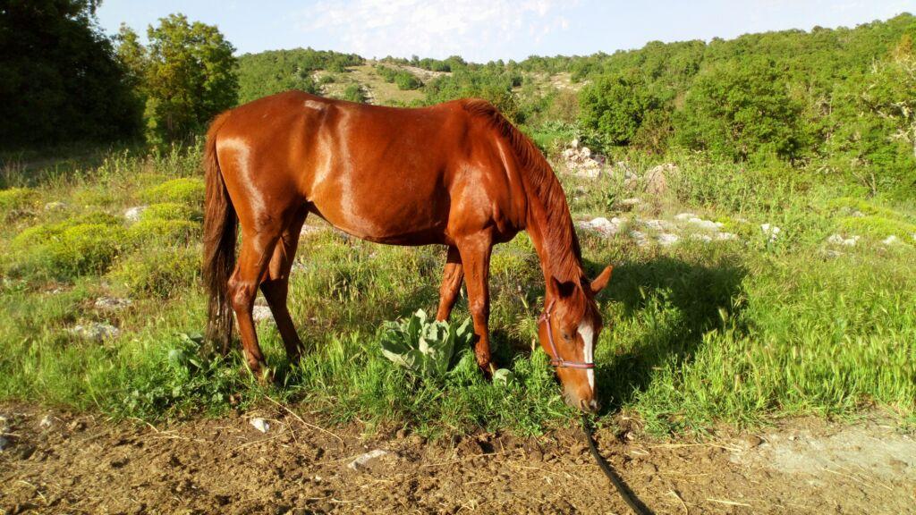 Optez pour un débroussaillement par les chevaux