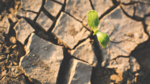 Possible sécheresse estivale : économisons l'eau