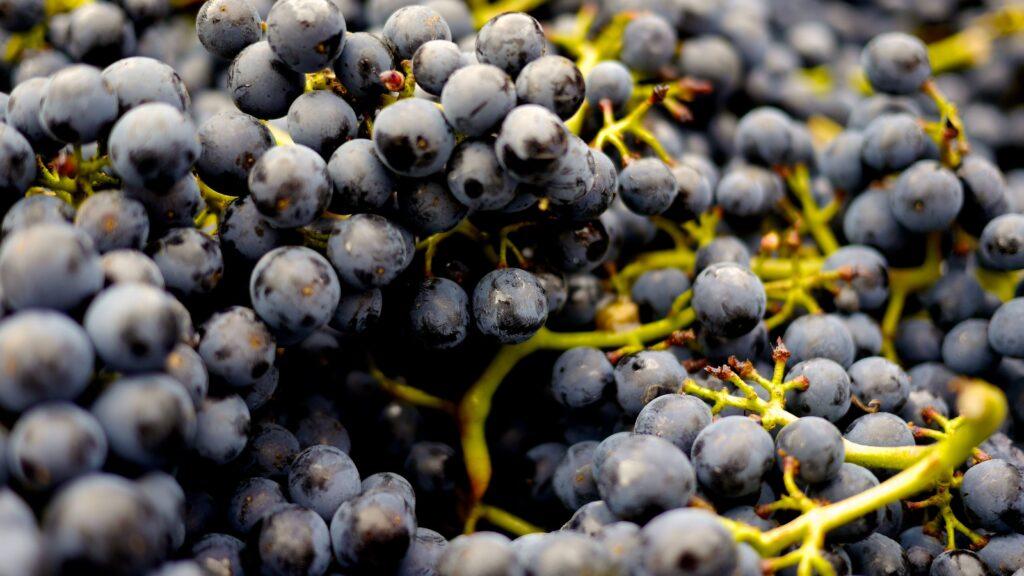 Les fruits et légumes de saison du mois de septembre