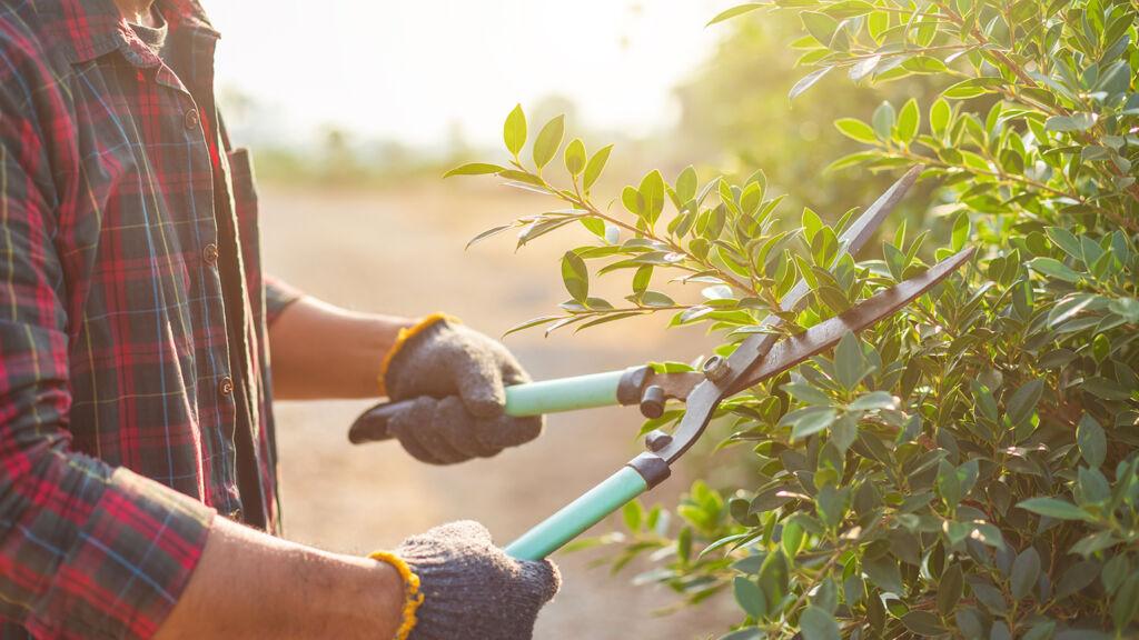 Changement de jour pour la collecte des végétaux