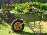 Collecte des végétaux: comment présenter vos végétaux pour la collecte